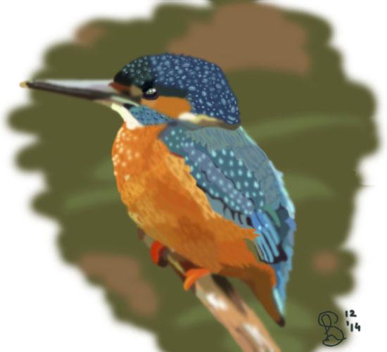 Tekening van kingfisher door Laura Schoenmakers