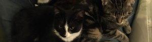 Foto van katten Cosmo en Sesam