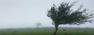 Een boom in de wind
